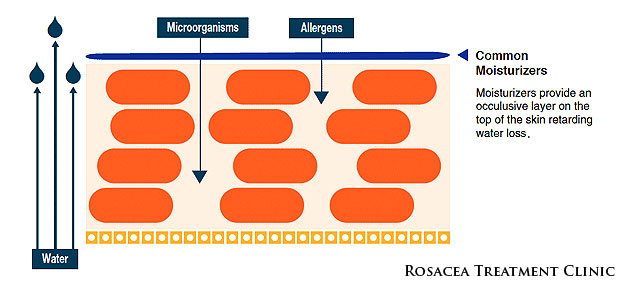 A moisturised skin barrier — skin is more hydrated, but still very vulnerable to allergens, irritants and general environmental factors which worsen rosacea.